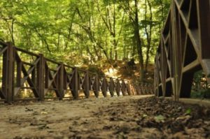 Belgrad ormani Белградский лес Стамбул