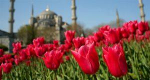 lale festivali Istanbul