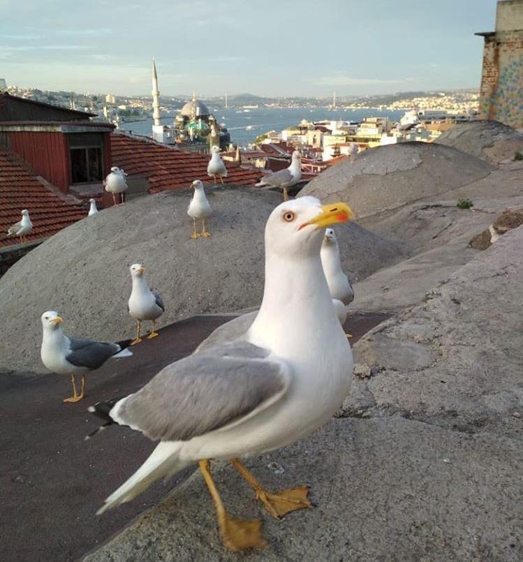Нетуристический Стамбул