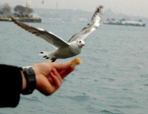 Тур по Босфору Стамбул