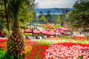 Фестиваль тюльпанов в парке Эмирган Стамбул