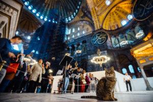 Стамбул город кошек