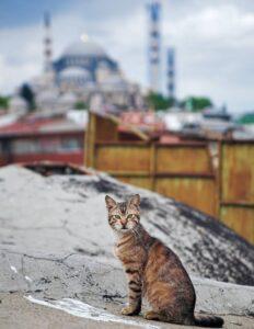 Кошки Стамбула фото
