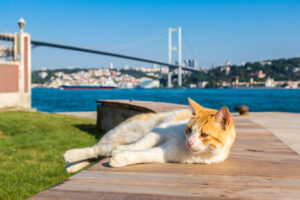 Почему в Стамбуле много кошек?