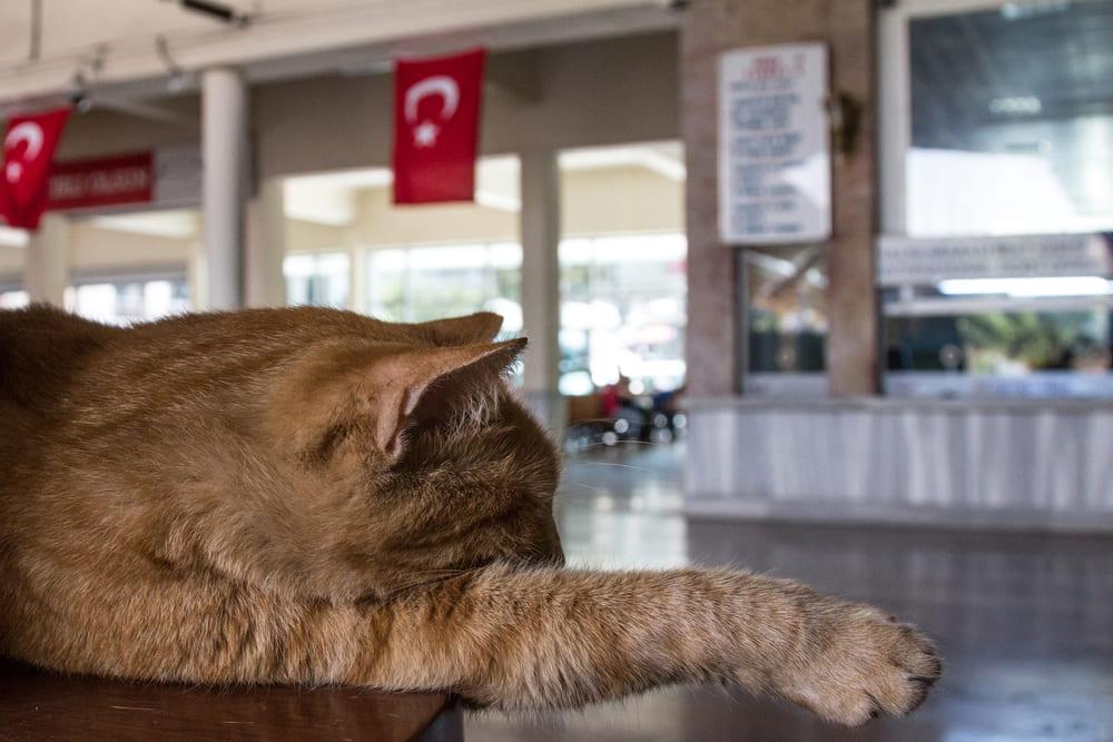 Кошки в Стамбуле, фото