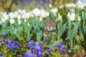 Фестиваль тюльпанов в Стамбуле - отличный повод отдохнуть на клумбе