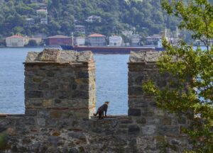 Кошки Стамбула, фото
