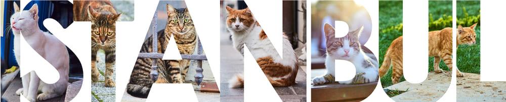 Стамбул, фото, кошки