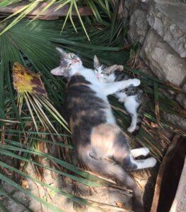 Стамбул, фото кошек