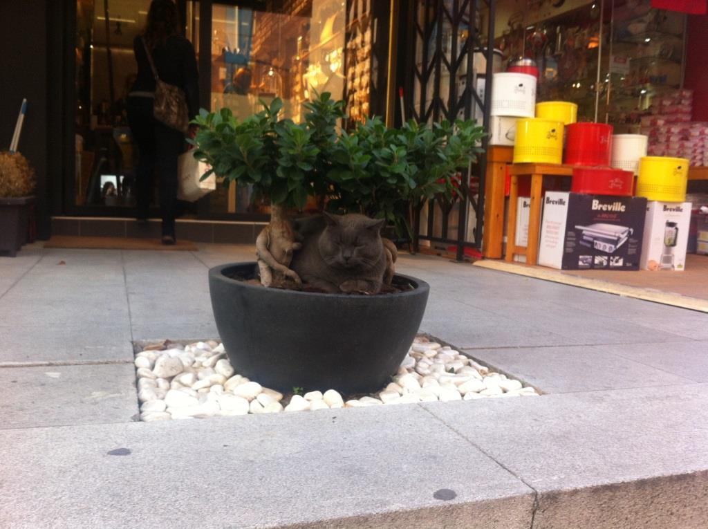 Стамбул - город кошек