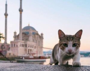 Коты Стамбула фото