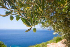 Турецкое оливковое масло