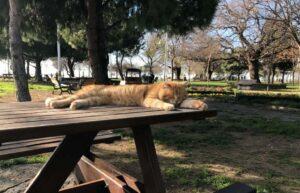 Стамбул парк Фенербахче