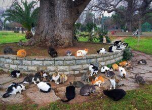 Парк Фенербахче, Стамбул